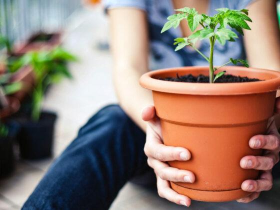Groenten kweken in bakken en potten