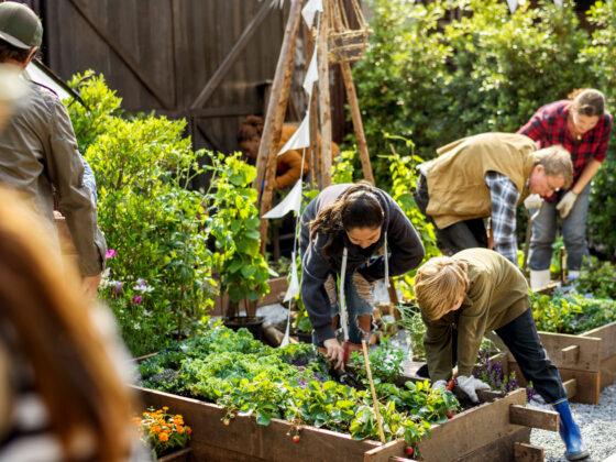 Tuin en zaaikalender voor juni met overzicht voor zaaien planten en oogsten