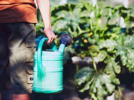 Tuin en zaaikalender voor augustus met informatie voor zaaien planten oogsten