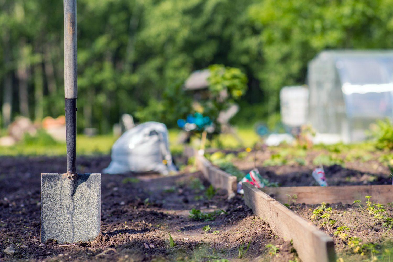 Tuinkalender met zaaikalender voor de maand maart