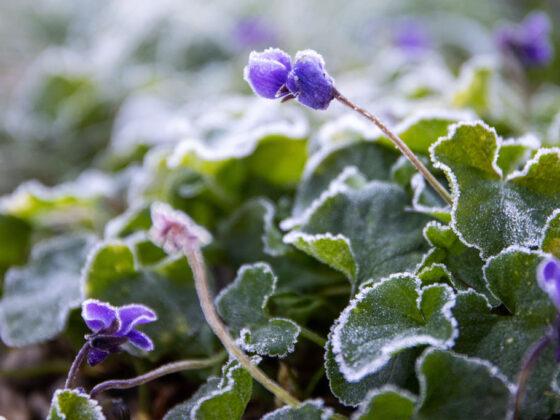 Tuinkalender en zaaikalender januari